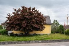 Aadorferstrasse-0901